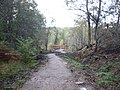Approach to the look-out, Plodda Falls - geograph.org.uk - 1537729.jpg