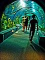 Aquarium (2488129589).jpg