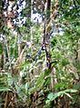 Aranha em trilha ao Rio Grande.jpg