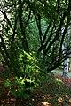 Arboretum-Montagnac.JPG