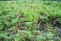 Areal perladangan di Petapahan (65).JPG
