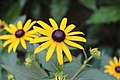 Artistic Flower Closeup.jpg