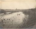 Ashbridge's Marsh looking northeast, circa 1909 -a.jpg