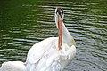 Assiniboine Park Zoo, Winnipeg (480554) (24821911110).jpg