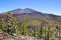 At Teide National Park 2019 061.jpg