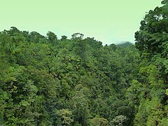 At Treetop through the Rainforest - panoramio.jpg