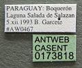 Atta vollenweideri casent0173818 label 1.jpg