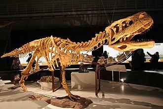 Abelisauridae - Reconstructed skeleton of Aucasaurus
