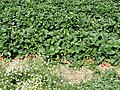 Autenried - panoramio (28).jpg