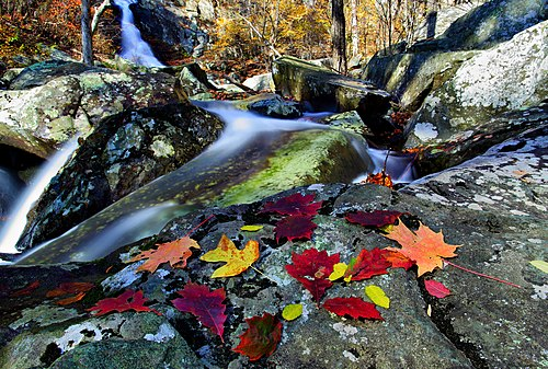 Autumn-leaves-near-waterfall - Virginia - ForestWander.jpg