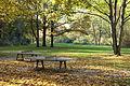 Autumn - Großer Tiergarten, Berlin, Germany - DSC09465.JPG