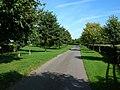 Avenue of trees - geograph.org.uk - 414559.jpg