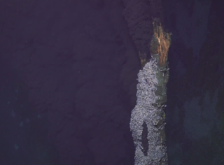 Beebe Hydrothermal Vent Field