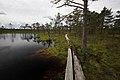 Bažina Viru Bog, Lahemaa, Estonsko - panoramio.jpg