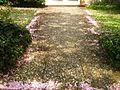 Bad Honnef Bloom - panoramio.jpg