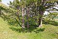 Baden-Württemberg, Bopfingen, Naturschutzgebiet Ipf, WDPA 82002-3.jpg