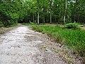 Balade en forêt d'Évreux 003.jpg