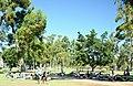 Balboa Park, San Diego, CA, USA - panoramio (35).jpg
