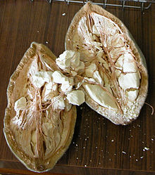 фото плоды баобаба