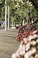 Bardolino Flowers (119252799).jpeg