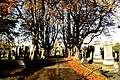 Barnsley Cemetery 4 November 2017 (143).JPG