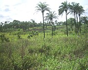 landscape in Bas-Congo