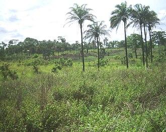 Wildlife of the Democratic Republic of the Congo - Bas-Congo landscape.