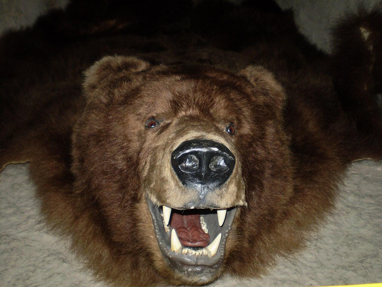 Bear fur.jpg