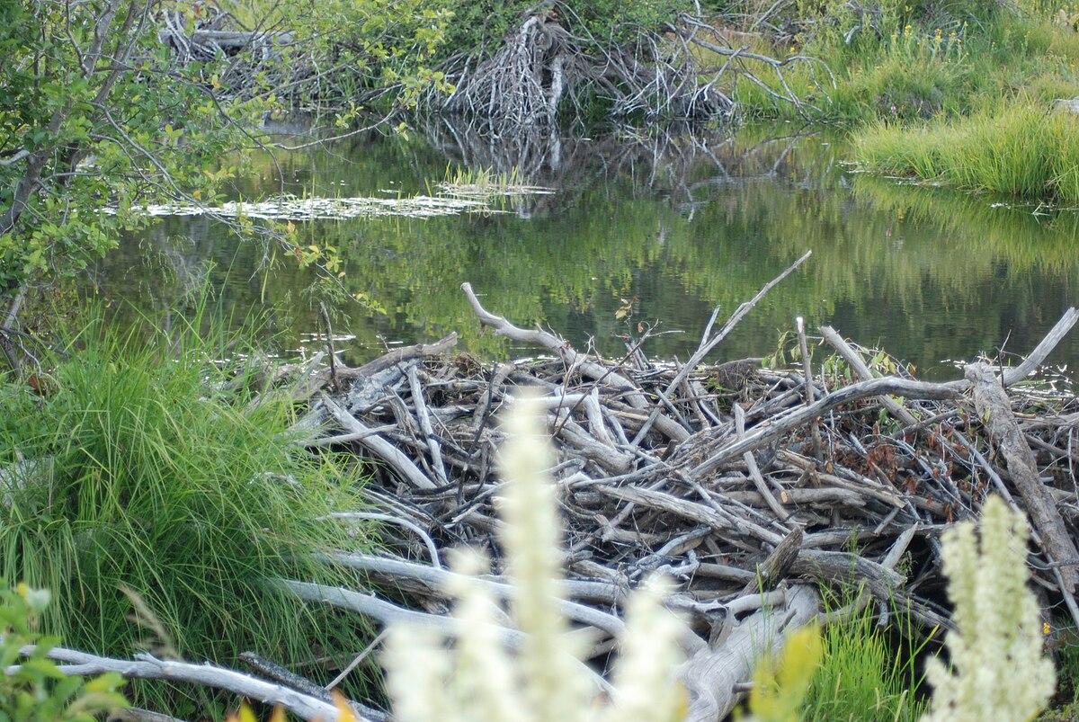 At the lake aug 1114 2014 pt 3 - 1 5