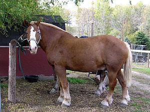 gotta love a draft horse mug (Belgian draft horse)