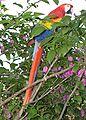 Belize54.JPG
