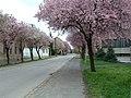Berettyóújfalu, József Attila utca, 2004-04-12 - panoramio.jpg