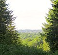 Between the trees - close to the Flour Mill - June 2013 - panoramio.jpg