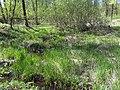 Bezhitskiy rayon, Bryansk, Bryanskaya oblast', Russia - panoramio (154).jpg