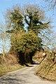 Bighton Lane, Bishop's Sutton, Hampshire - geograph.org.uk - 1747433.jpg