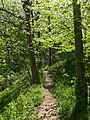 Billy Goat B Trail 2.jpg