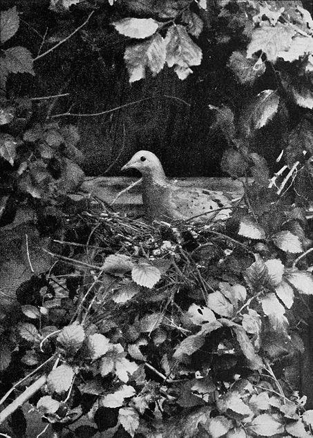 File:Birdonnest.jpg