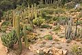 Blanes - Jardi Botanic Marimurtra - cactus garden (31010603416).jpg