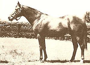 Blenheim (horse) - Image: Blenheim II