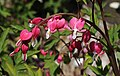 Blumen im Garten..2H1A1217WI.jpg
