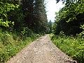 Bohuňov (SY), cesta od Študlova.jpg