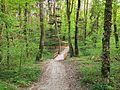 Bois de la Foretaille (6).jpg