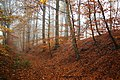 Bois du Pottelberg - Pottelbergbos 13.jpg
