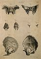 Bones of the skull; eight figures. Line engraving by A. Bell Wellcome V0007971.jpg
