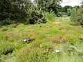 Botanischer Garten, Frankfurt am Main - DSC02601.JPG