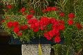 Bouquet rouge (30437114166).jpg