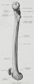 Braus 1921 276.png