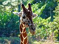 Brevard Zoo African Animals - Flickr - Rusty Clark (15).jpg