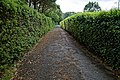 Bridleway at Nuthurst village, West Sussex, England.jpg