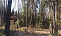 Bryansky District, Bryansk Oblast, Russia - panoramio (140).jpg